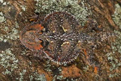 Animal Camouflage (51) 21