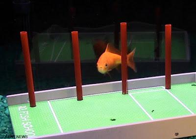 Intelligent Fish (7) 6