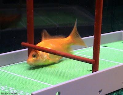 Intelligent Fish (7) 7