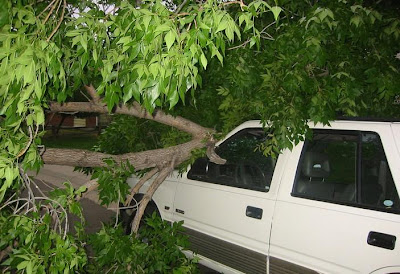 Cars Have To Confront Trees (8) 1
