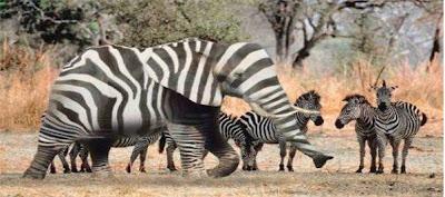 How to hide an elephant (8) 5