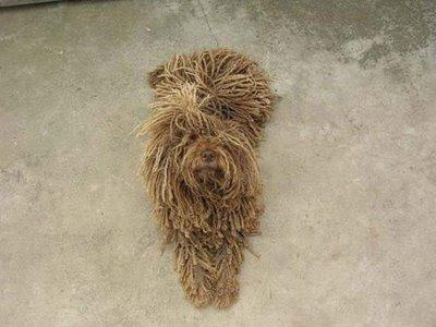 Dog (4) 2
