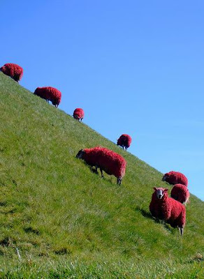 Painted Sheep (7) 2