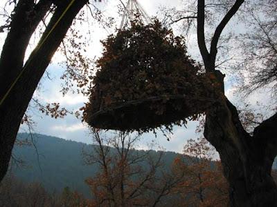 Nest House (5) 5