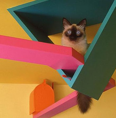 Awesome Cat Friendly House Design Part 2