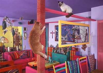 Awesome Cat-Friendly House Design 1