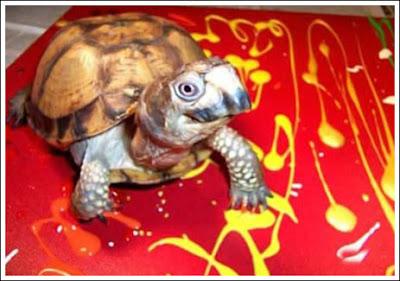 Turtle Art (5) 1