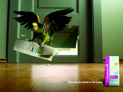 10 Creative Pet Food Advertisements (11) 6