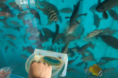 The Oita Marine Center Fish Tank (6) 4