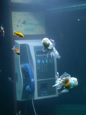Telephone Booth Aquarium (3) 2