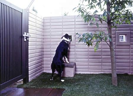Dog Friendly Backyard No Grass