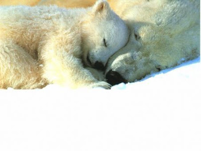 Cute Sleeping Animals (30) 30
