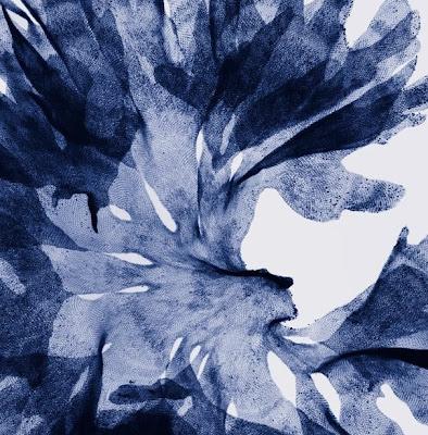 Flowers X-rays (15) 12