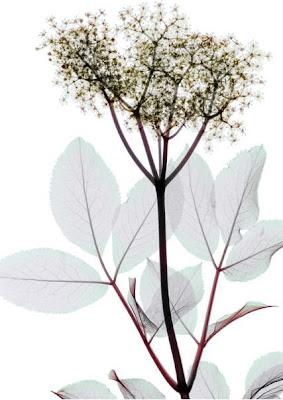 Flowers X-rays (15) 16
