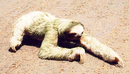 [Image: Sloth.jpg]