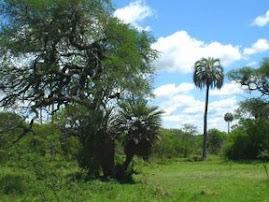 VISITE FEDERAL Y SU MARAVILLOSA GEOGRAFIA DE MONTIEL