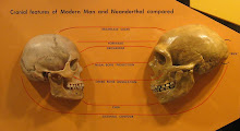 Sapiens / neandertal
