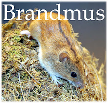 Brandmus