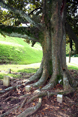 Southern Lagniappe If Trees Had Souls