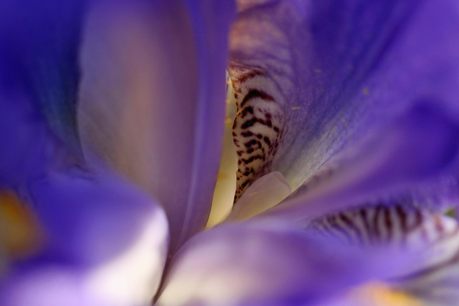 Southern lagniappe the soul of a flower and the closer i zoomed the brighter the light became izmirmasajfo