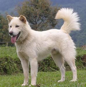 Kenapa Memelihara Anjing di Larang dalam Islam ? Inilah Bahayanya Memelihara Anjing