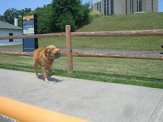 A loyal lock attendant