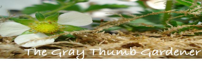 Gray Thumb Gardening