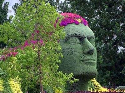 فن تشكيل و تزيين الأشجار-الفنون-منتهى