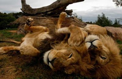 حديقة الحيوانات الأغرب والأعجب في العالم -غرائب وعجائب-منتهى