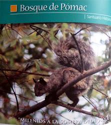 """Santuario Histórico. Historical Sanctuary """"Bosque de Pomac"""""""