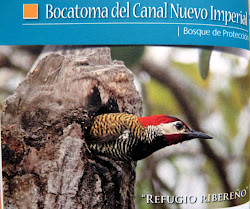 "Bosque de Proteccin. Forest Protection. ""Bocatoma del Canal Nuevo Imperial"