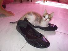 gatito+zapatitos...