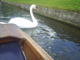 Cambridge Swan '07