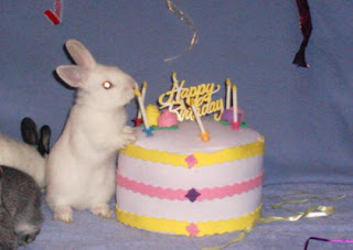birthday rabbit