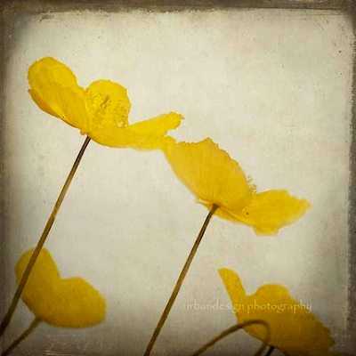 yellow flower photography