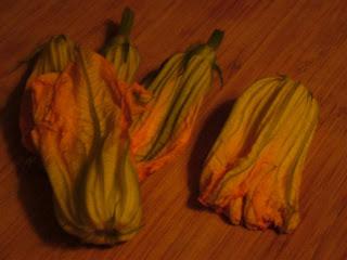 zucchini squash blossoms: a study in sepia