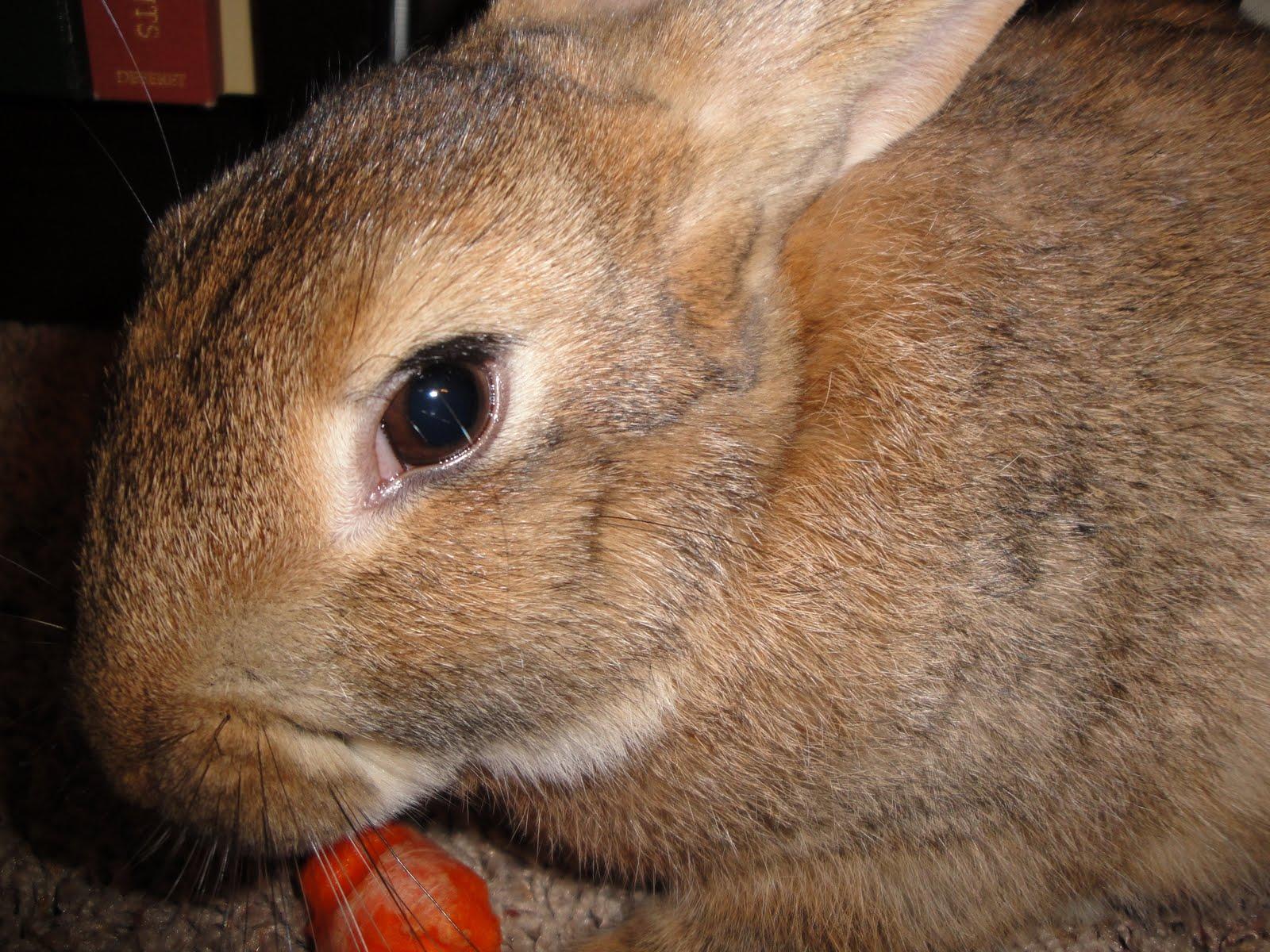 Brown Family: Bad Bunny