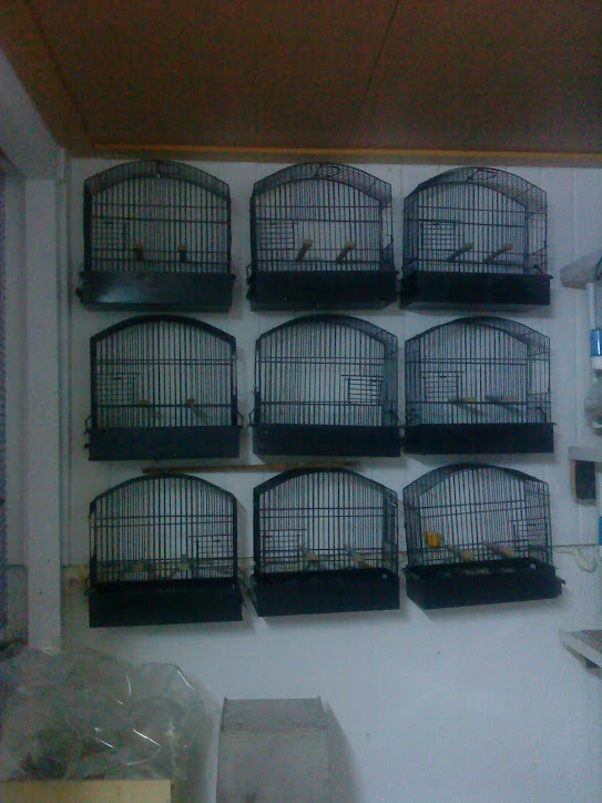 gaiolas de  exposiçao