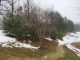 snow near back of Suitland bog