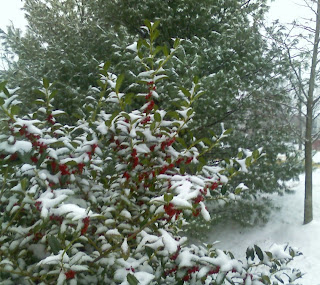 snow on holly
