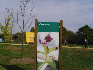 cuphea plant sign