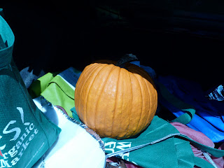 pumpkin from Clagett Farm in car trunk