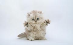 pussy cat ;))