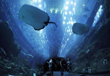 Dubai Aquarium di Dubai Mall