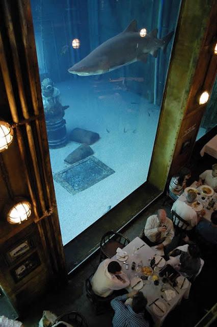 Ushaka Aquarium, Afrika