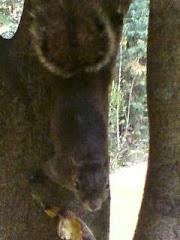 Esquilo, foto tirada no Vale da Benção no Centro de Oração