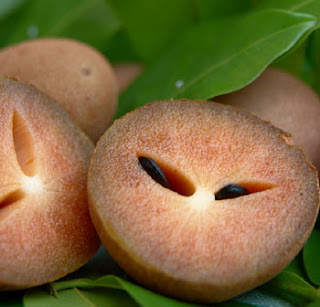 http://3.bp.blogspot.com/_O5yqxEV-CkA/SdmIT_JYY2I/AAAAAAAAAGs/EnZW2RWE73w/s320/sapodilla-fruit-sapota.jpg