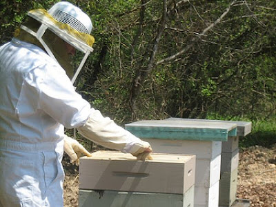 Honey Bee Keeper and Hives