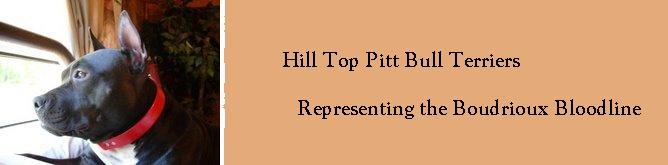 Hill Top Pittbull Terrriers