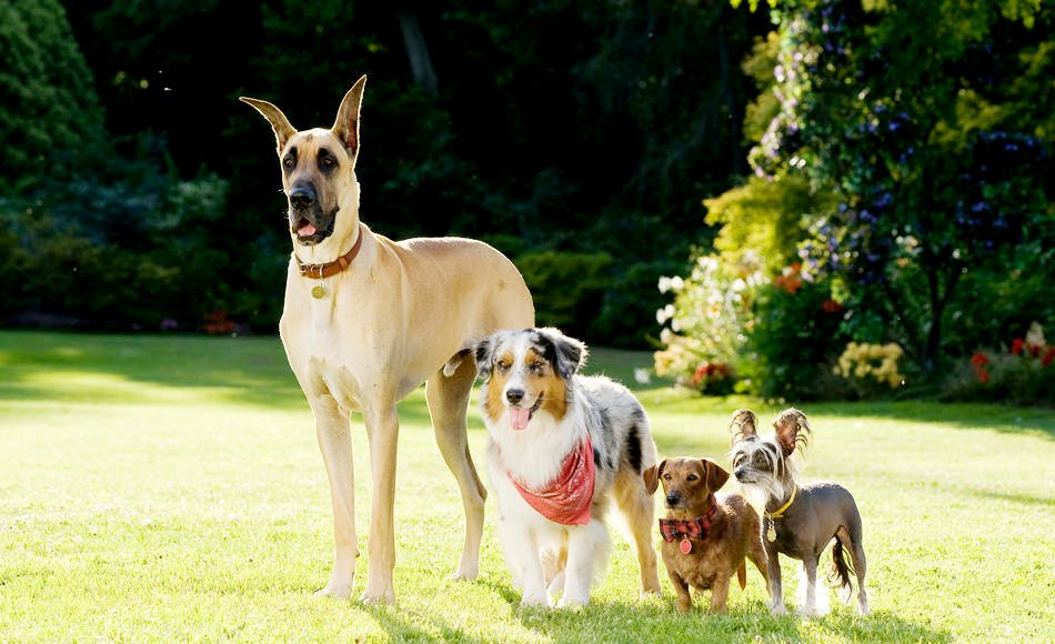 Top 10 Tallest Dog Breeds in the World  World Most
